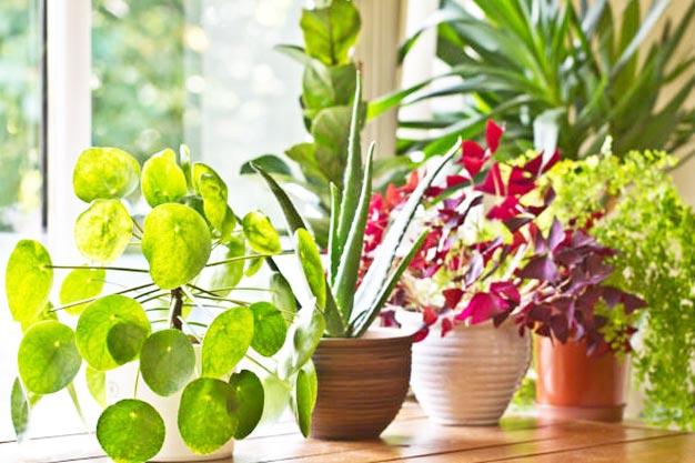 Send Plants Online