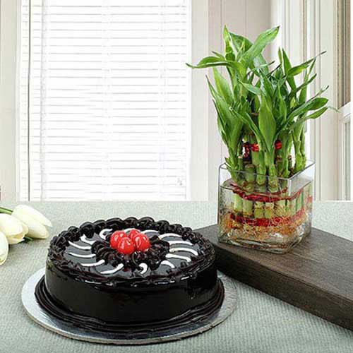 Truffle Cake N Lucky Bamboo