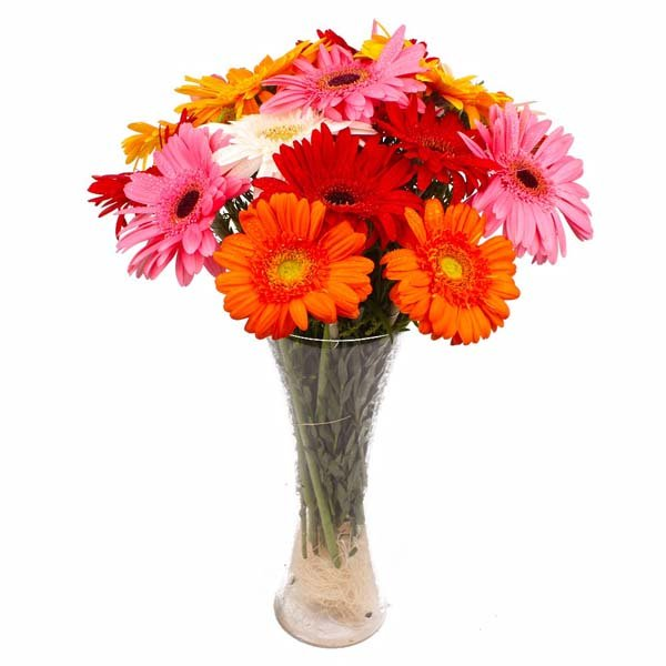 Multi Colorful Gerberas Arranged in Glass Vase