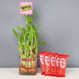 Awesome Behan With 2 Layer Lucky Bamboo Plant With Five Kitkats
