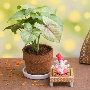 Syngonium Plant in Coir Pot with Lord Ganesha Idol