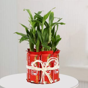 Karwa Chauth Plants Gifts Online Delivery