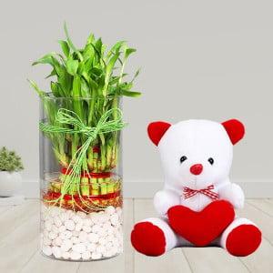 3 Layer Lucky Bamboo Terrarium with Teddy
