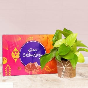 Money Plant With Celebration