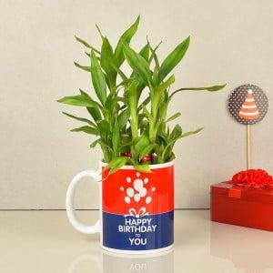 Birthday Plants Online