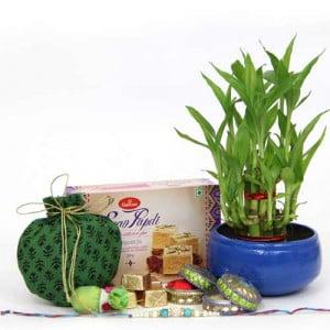 Rakhi Combo n Lucky Bamboo