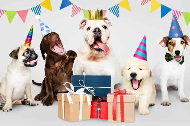 Gifts For Pet Online